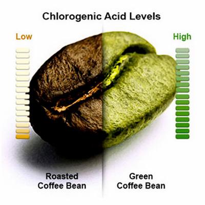 Green Coffee Bean With Svetol