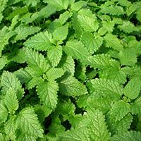 The Vert Serenite Bio
