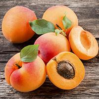 Infusion Romarin Abricot Bio