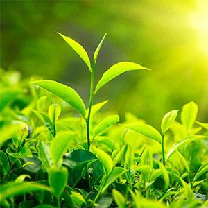 The Vert Minceur Bio