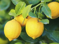 Bain Vivifiant au Citrus